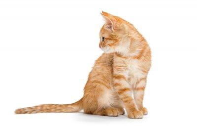 Plakát Orange, striped, little kitten