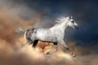 Plakát Orlov kůň běží v prachu