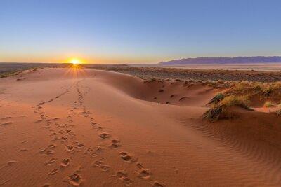Plakát Oryx stopy do západu slunce