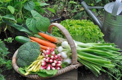 Plakát Panier de légumes frais dans potager