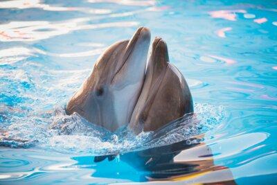 Plakát Pár delfínů tančí ve vodě