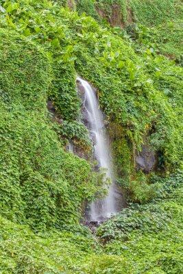 Plakát paroi humide et verdoyante, Anse des Cascades, Ile de la Réunion
