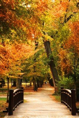 Plakát Pasarela Parque del otoño