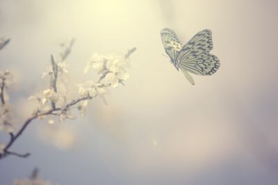 Plakát Pastel colored photo of butterfly and spring flowers