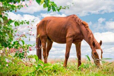 Plakát Pastva hnědého koně na zelené pastviny s krásnou přírodou