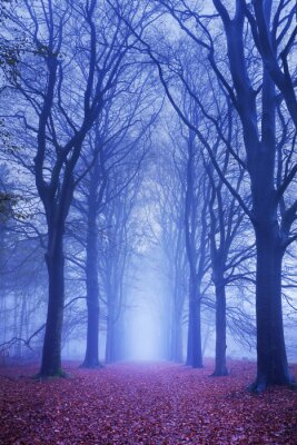 Plakát Path in a dark and foggy forest in The Netherlands