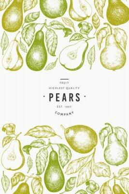 Plakát Pear design template. Hand drawn vector garden fruit illustration. Engraved style garden fruit frame. Retro botanical banner.