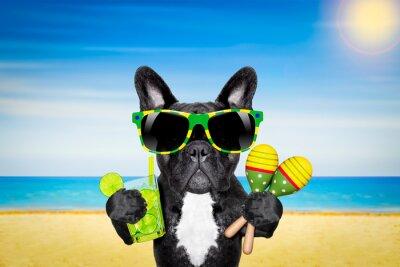 Plakát Pes letní pláž koktejl