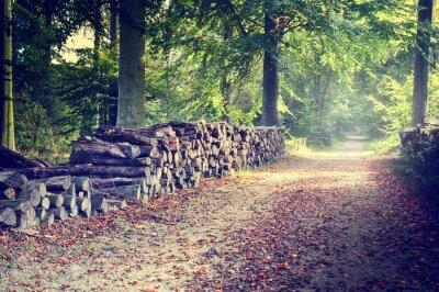 Plakát Pěšina v podzimním lese
