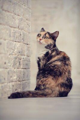 Plakát Pestrobarevné kočka poblíž cihlové zdi světelné