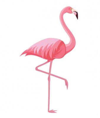 Plakát Pink flamingo on a white background. Vector illustration.
