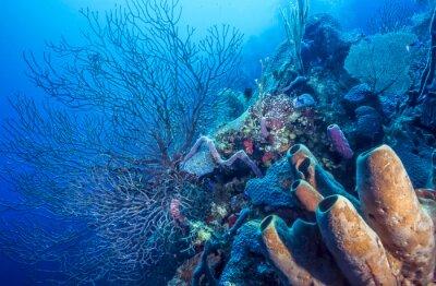 Plakát Podvodní korálový útes