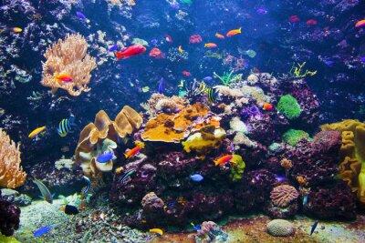 Plakát Podvodní scény s rybami, korálový útes