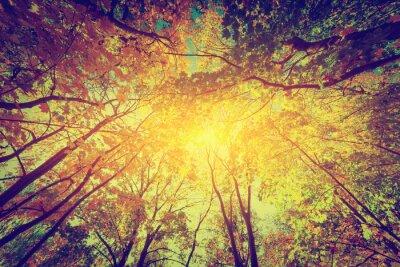 Plakát Podzim, na podzim stromy. Slunce svítí přes barevné listí. Ročník