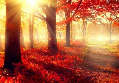 Plakát Podzim scény. Krásné podzimní parku na slunci