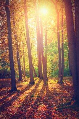 Plakát Podzimní krajina