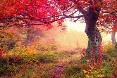 Plakát podzimní les