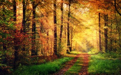 Plakát Podzimní les krajina s paprsky teplým světlem