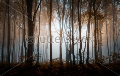 Plakát Podzimní mlha les. Balkánské hory, Bulharsko.