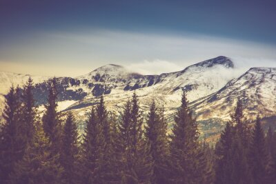 Plakát Podzimní stromy v lese a sněhem pokryté hory v dálce.
