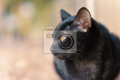 Fotografie černé kočičky