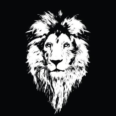 Plakát Portrét krásné lev, lev ve tmě