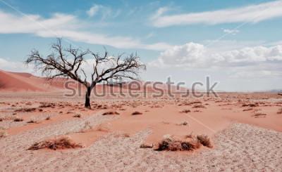 Plakát Pouštní strom