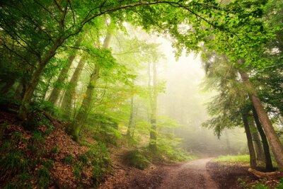 Plakát Přírodní podloubí stromů