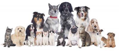 Plakát Psi a kočky Group