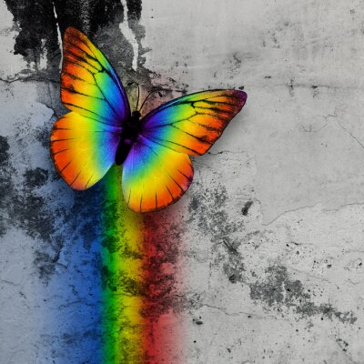 Plakát rainbow butterfly