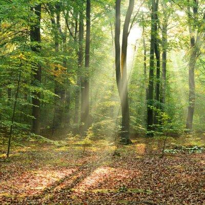 Plakát Ráno v lese