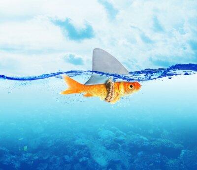 Plakát Red Fish jako žralok