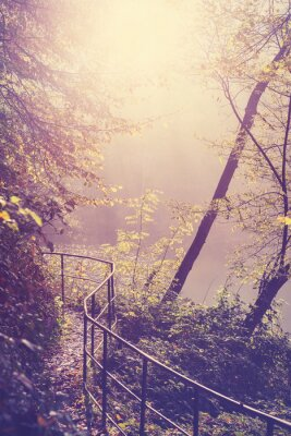 Plakát Retro filtrovaný obraz cesty v lese.
