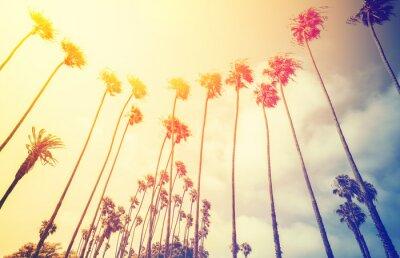 Plakát Retro stylizované palmy při západu slunce, Santa Monica, USA.