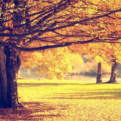 Plakát Rozmazané podzimní scéna