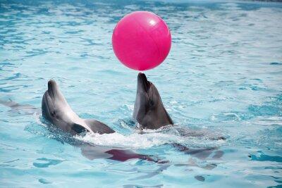 Plakát roztomilé delfíny během projevu v delfináriu