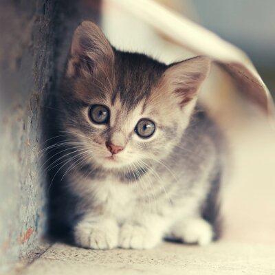 Plakát roztomilé koťátko umísťovací venku