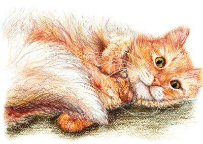 Plakát Roztomilý pěkný zázvor kočičím ručně kreslenými umění