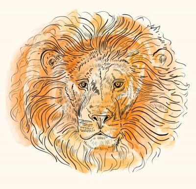 Plakát Ručně kreslenými vektorové ilustrace s lví hlavou