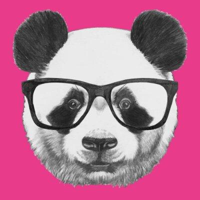 Plakát Ručně malovaná portrét Panda s brýlemi. Vektorové samostatný prvky.