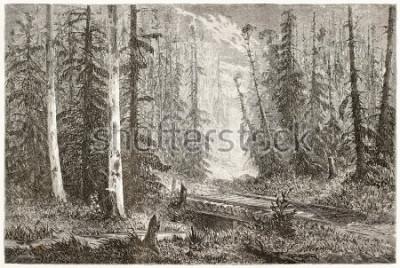 Plakát Ruská jedle les staré ilustrace. Vytvořil Moynet, veřejnost v Le Tour du Monde, Paříž, 1867