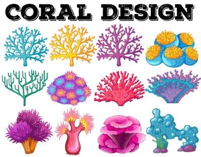 Plakát Různé druhy korálů designu