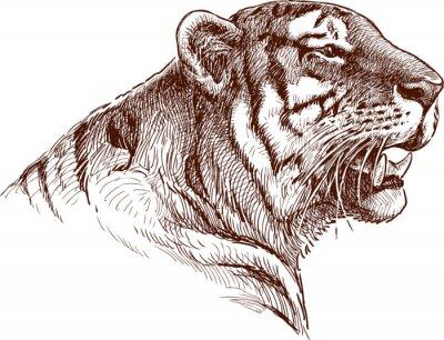 Plakát řvoucí tygr
