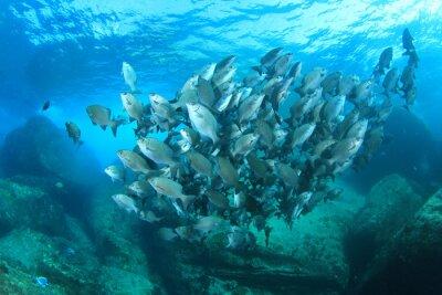 Plakát Ryby škola na podmořský korálový útes v moři oceánu