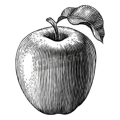 Plakát Ryté ilustrace jablko Vector