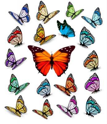 Plakát Sada různých barevných motýlů. Vector.