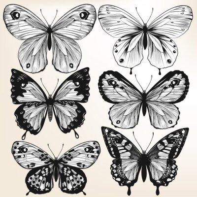 Plakát Sbírka vektor kreslené ručně podrobné motýly pro design