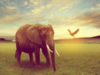 Plakát scenérie včetně slona africe