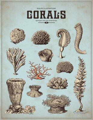 Plakát sea-life ilustrace: korály, houby a mořské sasanky (1)