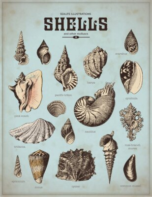 Plakát sea-life ilustrace: mušle (1)